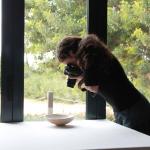 Fotografía gastronómica: la imagen del sabor
