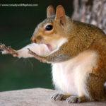 Humor en la fotografía: los finalistas de los Comedy Wildlife Photography Awards